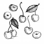 Hand-drawn Vector Illustration. Collection Of Cherry. Line Art. Isolated On White Background.