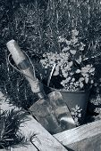 Toned Stainless Steel Garden Trowel In Herb Garden