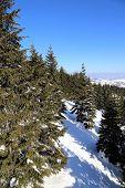 image of serbia  - Beautiful landscape of mountain Kopaonik in winter - JPG