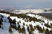 Mountain Kopaonik in winter,  Serbia.