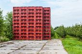 Empty Red Picking Crates Stacked Near An Orchard