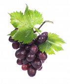 Grape cluster with leaves isolated