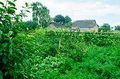 Landscape Of Garden In Village