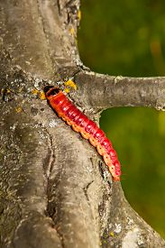 stock photo of cocoon tree  - The huge bright caterpillar creeps on a tree - JPG