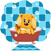 foto of quadruped  - The dog bathes in a bathroom - JPG