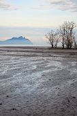 picture of tide  - Dead trees in beach at low tide in bako national park sarawak borneo malaysia - JPG