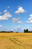 foto of farm-house  - New house on a farm in a field of ripe grain with daisies - JPG