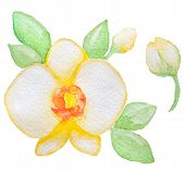 stock photo of yellow orchid  - Watercolor yellow orchid and green leaves vector illustration - JPG