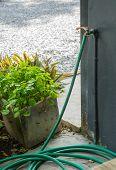 foto of spigot  - A Water Spigot With A Green Hose Springs A Leak In Garden - JPG