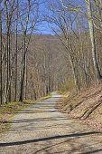 image of virginia  - Quiet Rural Road in Shenandoah National Park in Virginia - JPG