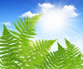 stock photo of fern  - Fern leaf on blue sky - JPG