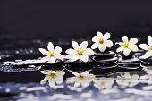 stock photo of gardenia  - Still life with gardenia on black pebbles  - JPG