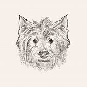 stock photo of scottie dog  - Vector sketchwest highland terrier - JPG