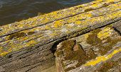 picture of lichenes  - Closeup of weathered wooden beams covered with lichen and moss on a sunny day in spring - JPG