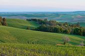 image of butt  - Farmland in early morning Steptoe Butte State Park Oakesdale Washington - JPG