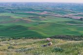 stock photo of butt  - Farmland at dusk Steptoe Butte State Park Oakesdale Washington - JPG