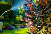 pic of pest control  - Backyard Garden Pest Control Spraying - JPG