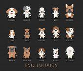 pic of english-mastiff  - Set of english dogs eps10 vector format - JPG