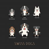 picture of swiss shepherd dog  - Set of swiss dogs eps10 vector format - JPG