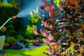 stock photo of pest control  - Backyard Garden Pest Control Spraying - JPG