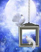Peace dove 2