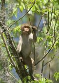 picture of tarzan  - (Wild Florida Monkey) Thank you very much for looking Silver River Florida
