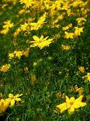 Single Yellow Flower
