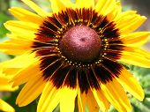 Cropped Macro Of Sunflower