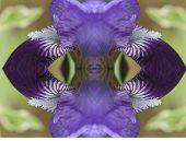 Iris X4 Absrtact