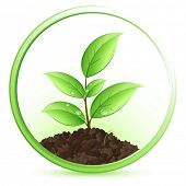 pic of green leaves  - Green plant - JPG