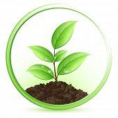 stock photo of green leaves  - Green plant - JPG
