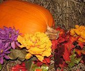 Harvest Arrangement