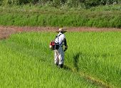 Man Working In The Rice Field