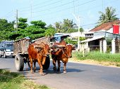 stock photo of ox wagon  - An oxen cart impedes traffic on a road in Vietnam - JPG