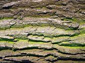 Old Bark Texture