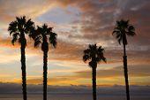 Palm Tree Silhoutte Sunset