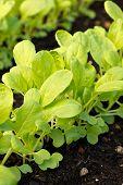 Garden Plant Seedlings