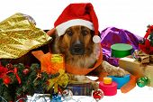 Mixed Breed Dog Has Done Preparings For Christmas