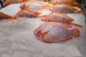 Red Tilapia (ruby Or Red Or Pink Fish), Fresh Fish Is In The Stall On Ice In The Modern Supermarket. poster
