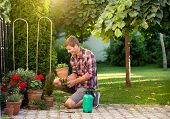 Man Taking Care Of Plants In Garden poster