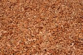 Flax Seeds Texture. Flax Seeds Background. Flaxseed Or Linseed. Cereals. Top View poster