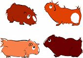 Vector illustration of cute guinea pigs