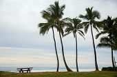 Palm Trees At The Beach Of Haleiwa, Oahu, Hawaii poster