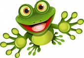 picture of amphibious  - illustration merry green frog with greater eye - JPG