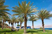 Beautiful Tropical Palm Trees