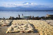 Seaweed Drying Nusa Lembongan Bali