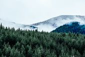 Foggy Autumn Forest Valley, Mystical Valley Background. Pine Trees Silhouettes In A Morning Fog, Blu poster