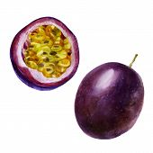 Watercolor Illustration. Passion Fruit. Image Of Half Passion Fruit poster