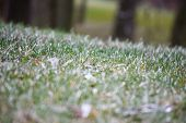 Frozen Grass On Meadow Close Up. Morning Frost On Green Grass At Early Winter Or Autumn Cold Morning poster