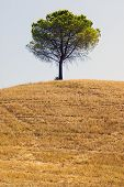 Tree In The Countryside Of Apulia